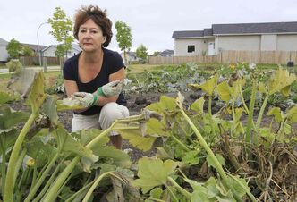 Brenda Tate's garden in Transcona's Paulicelli Park was teeming with vegetables — until thieves picked it bare earlier this week. Tate isn't the only city gardener whose plentiful harvest has been pillaged this summer.