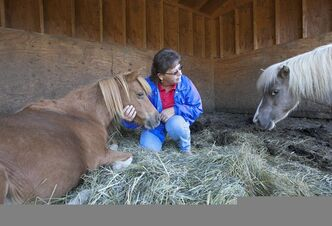 Genea Stoops who runs Hooves & Paws Rescue of the Heartland, tends to Buttercup, left, a twenty-year-old miniature horse she shelters in Glenwood, Iowa, Friday, Aug. 17, 2012. Because of drought, little but stubble is left on pastures, and hay prices have soared, forcing some owners who can no longer afford to feed their horses to abandon them on the doorstep of animal rescue operations such as the Stoops' .(AP Photo/Nati Harnik)
