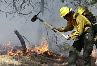 An AmeriCorps volunteer firefighter assigned to the El Paso County Sheriff's Office, Woodland Fire Crew, helps contain a spot fire in an evacuated area of forest, ranches and residences, in the Black Forest wildfire area, north of Colorado Springs, Colo., on Thursday, June 13, 2013. The blaze in the Black Forest is now the most destructive in Colorado history, surpassing last year's Waldo Canyon fire, which burned 347 homes, killed two people and led to $353 million in insurance claims. (AP Photo/Brennan Linsley)
