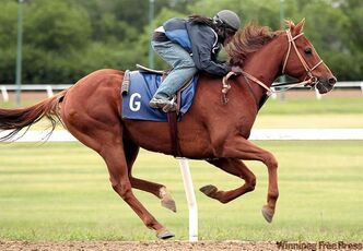Downs jockey Juan Crawford gives Royal Kelly a workout on Thursday. Crawford will ride in two races on Saturday.