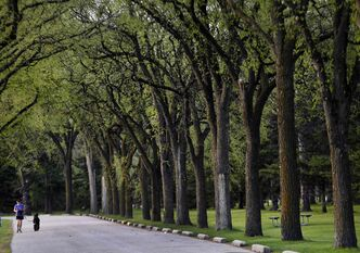 Liv Thorseth is surrounded by greenery as she takes a 5.5-km run in Assiniboine Park Tuesday morning.