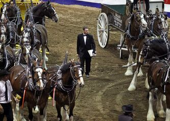 Wes Gordeyko judges the eight-horse teams Friday at the Royal Manitoba Winter Fair in Brandon.