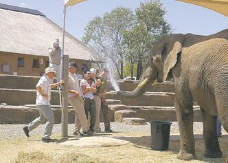 PRETORIA -- Adventures with Elephants is a rescue, rehabilitation, research and educational facility. (Joanne Elves/for Calgary Herald)