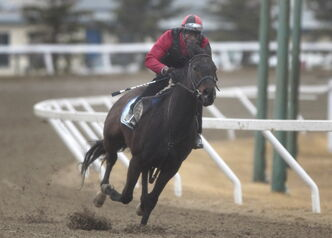 Neville Stephenson rides Get Even Girl at Assiniboia Downs.