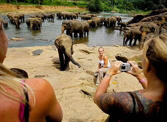 A tourist poses for photographs with a herd of elephants bathing at a river near an elephant orphanage in Pinnawala.