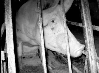 MERCY FOR ANIMALS CANADA