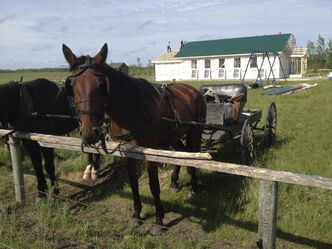 A horse and buggie stand outside a new school being built at an Old Order Mennonite community.