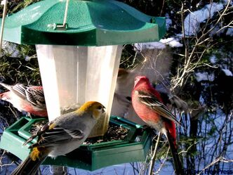 Birdfeeders at Barrier Bay Resort in the Whiteshell.