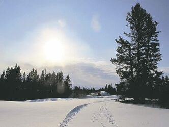 You -- and the wildlife -- often have the cross-country ski trails of Spruce Woods Provincial Park all to yourself.