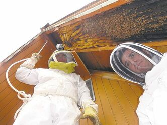 photo courtesy Vic Bachman / The Associated Press