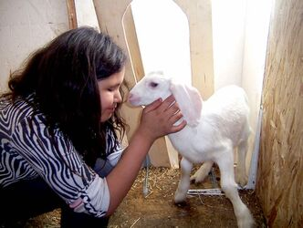Jamie Bignell bottle-feeds one of her family's newborn goats. She loved a recent field trip to a Flin Flon mine.