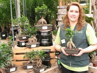 Members of the Bonsai Society of Winnipeg will be offering advice on caring for bonsai, such as the banyan bonsai held by Deanne Cram.