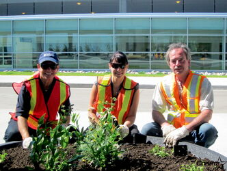 Winnipeg Airports Authority staff plant flowers around airport campus as part of its 2012 Greening Day. From left: Wendy Tyson, Terri Carriere and Ron Delaney.