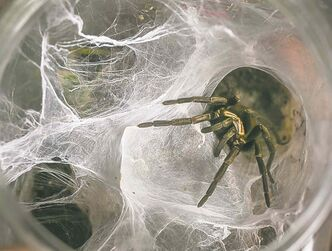 AP Photo/Damian Dovarganes