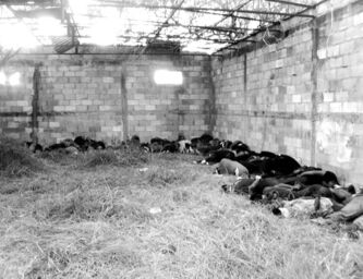 The bodies of men and women, allegedly killed in 2010 by the Zetas drug gang, in an abandoned warehouse in San Fernando, near the city of Matamoros, Mexico.