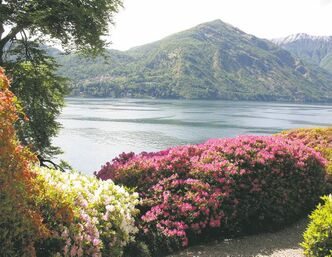 The famed Villa Carlotta, which sits on eight hectares overlooking Lake Como in the Italian Lake District, is renowned for its collection of more than 150 varieties of azaleas and rhododendrons.