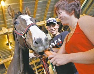 SARAH O. SWENSON / WINNIPEG FREE PRESSJockey Jennifer Reid gives winning filly Mining Town a carrot snack, while groom Curtis Gamble holds the reins at the barns at Assiniboia Downs.