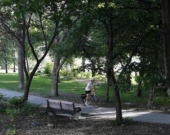 It was a perfect morning for cycling through the city's parks and urban forests -- this cyclist uses a pathway in Stephen Juba Park.  The weekend forecast, however, calls for rain.