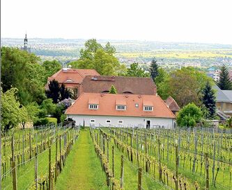Radebeul vineyard, located 10 kilometres from Dresden, is Sachsen's oldest producer of Sekt (sparkling wine).