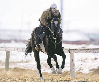 Jockey Jerry Pruitt rides Slipper Sue around the training track at Assiniboia Downs on Wednesday.