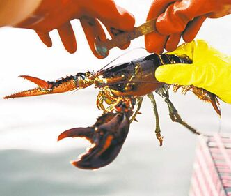 Feel free to eat as much lobster as you can afford.