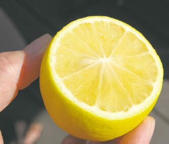 Fresh lemons grown indoors?  There are many suitable species and cultivars of citrus plants available. Even the smallest of plants, from two feet tall, bear fragrant flowers and fruit.