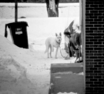 A Grant Park-area dog is chained outside in the cold and raising its paw in a possible sign of distress from the chill.
