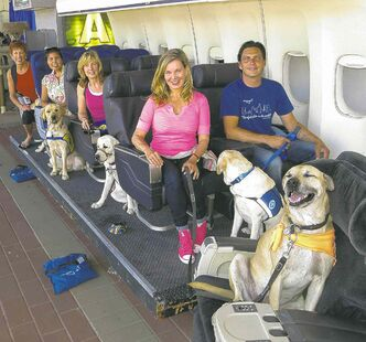Megan Blake, Air Hollywood K9 Flight School program director, left, front row, with dog Super Smiley, far right, and other puppies from the Canine Companions for Independence.