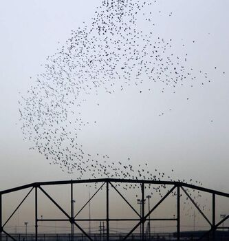Pigeons rise over the Arlington Street bridge.