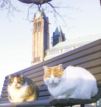 The sanctuary — a holdover from the days when cats worked as mousers on Parliament Hill — was once home to as many as 30 strays, but spaying and neutering has reduced their ranks to just four today.