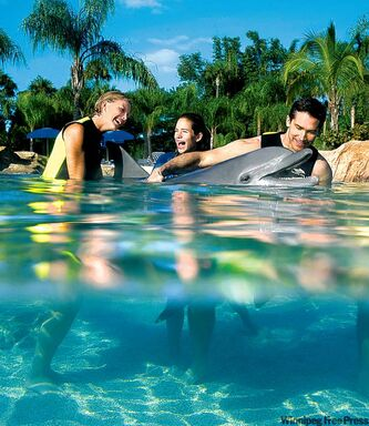 Discovery Cove provides close-up adventures with sea life.