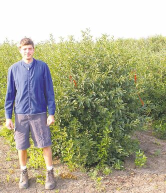 Peter Reimer, from the University of Saskatchewan's Fruit Program, stands in front of a Dwarf sour cherry bush, which produces the largest hardy cherry on the prairies. Look for the Romance series. Cupid, shown above, is the largest of all the cherries.
