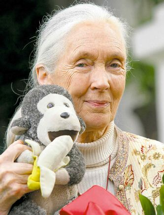 Jane Goodall's musings on the world of plants bring some big ideas, but little cohesion.