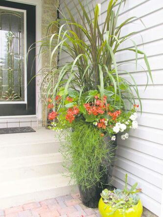 Fountain grasses are  non-stop  performers in container  arrangements. Look for Princess for a long lasting dramatic display.