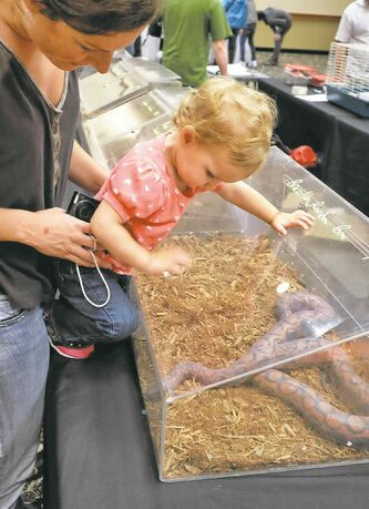 Eighteen-month-old Faith Waltham expresses her delight over the Brazilian rainbow boa with her mom, Crystal Ringach, at the Manitoba Reptile Breeders' Expo at the Victoria Inn Sunday.
