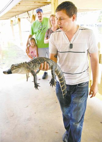 Handler Cody Morgan shows off Fluffy the metre-long alligator at Boggy Creek Airboat Rides.