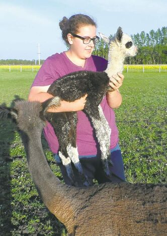Kristi Loeb shows off a nameless baby alpaca.