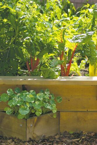 No need to plant in rows. A diamond-shaped raised bed transforms a homeowner's front-yard landscape with seductive, culinary delights such as radiantly red-stemmed swiss chard. Edible nasturtiums planted close by will soon spill forth with orange, yellow and red blossoms for a tantalizing combination. Salad, anyone?