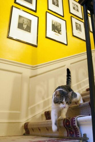 Larry, a tabby recruited by Britain's Prime Minister David Cameron to ward off mice at his official residence 10 Downing Street, has recorded his first kill in months. (AP Photo archives / Mark Large)