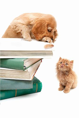 The Winnipeg Humane Society is collecting books and DVDs for fundraiser.