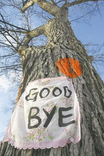 The city will spend an additional $1.9 million to fight Dutch elm disease.