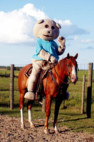 "Children's Hospital Foundation mascot Dr. Goodbear is shown with Regalo, which is Spanish for ""gift horse"". Regalo, currently owned by the Federation of Christian Cowboys, will be auctioned off in Brandon next month with all proceeds going to the foundation."