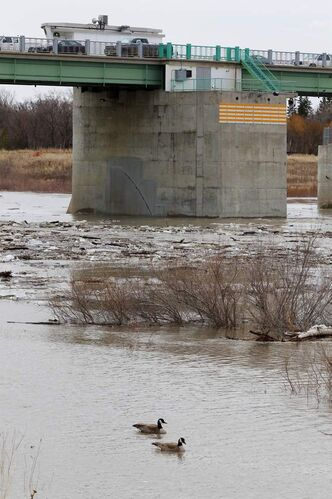 Two geese swim near the floodway gates south of Winnipeg.  The gates will rise, diverting Red River water into the floodway, Monday evening.