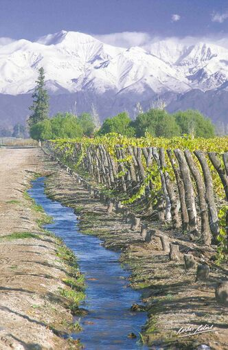 Argentina's wine region has some of the highest altitude vineyards in the world,  ranging from almost 900 to 1,200 metres above sea level.