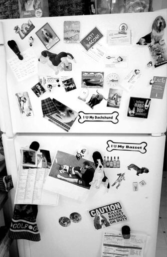 Life is shared on the family refrigerator, since we all know the kids need to eat.