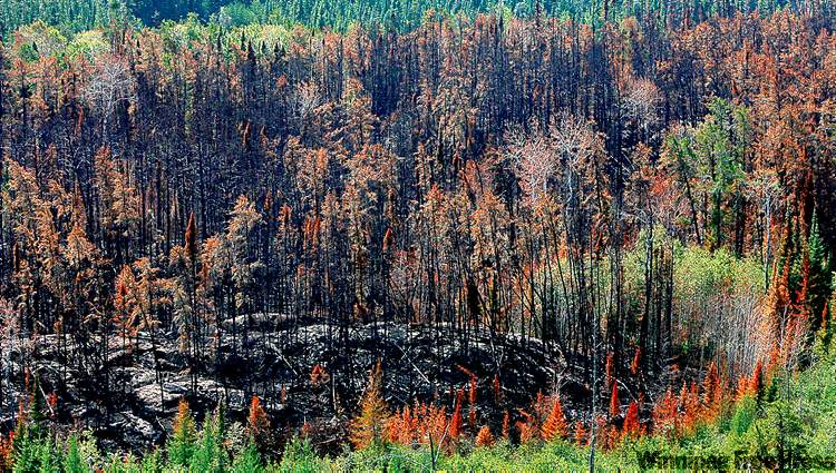 Scorched earth from the aftermath of a forest fire in the Bissett area seen from the air on Wednesday.