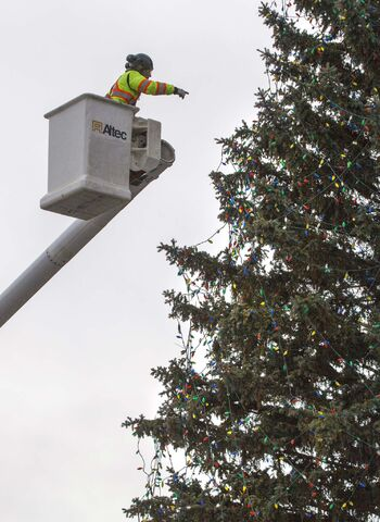 It took some work to get the lights strung up on the city hall tree. (Mike Deal / Winnipeg Free Press files)