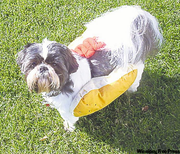 "This Shih Tzu is truly a ""hotdog"" this Halloween! -- Charlene and Braden Baraniuk"