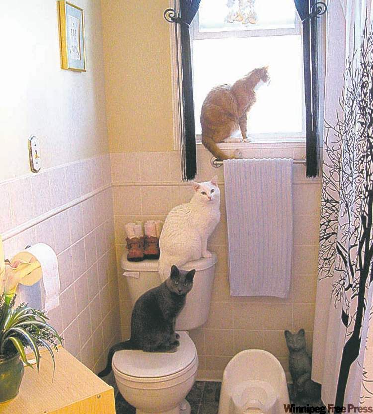 Here is the hierarchical order, in our house. He, who is king, gets the bathroom window (Oscar). He, who is the middle man, gets the top of the toilet (Walter). He, who is the newest, gets the toilet seat (Gilbert). And the statue gets the corner. — Luanne Scott, Winnipeg