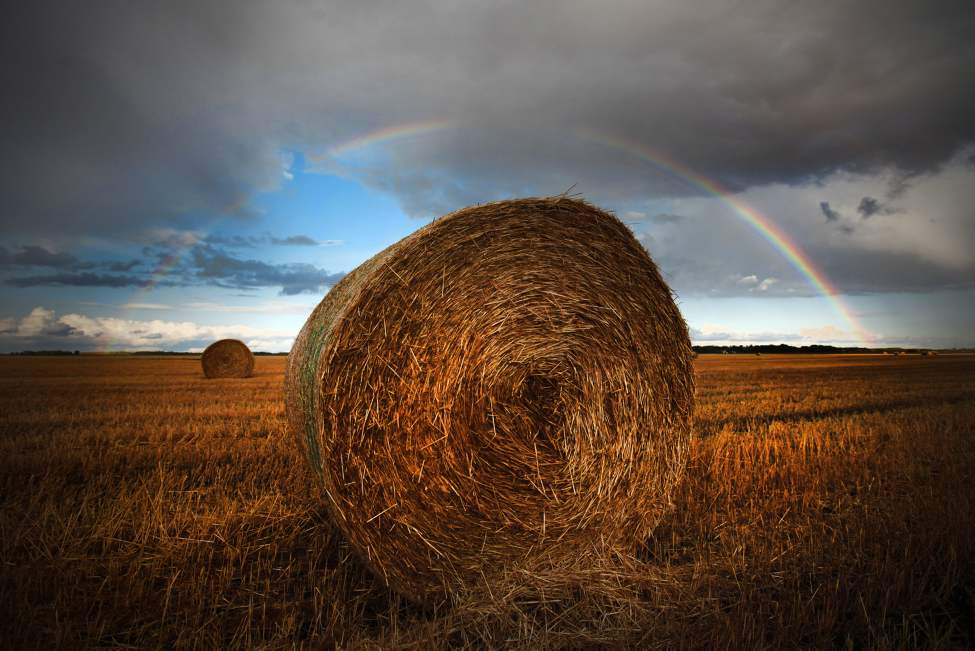 Hay bales sit under a rainbow just west of Winnipeg. September 3, 2011.